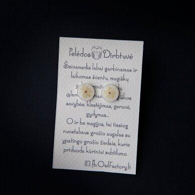 """Sidabriniai auskarai """"Švelnus Šeivamedis"""" (10mm)"""